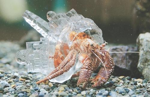 Article: W新聞「河北新報」 記事掲載 「<うみの杜水族館>透明な殻のヤドカリ現る」