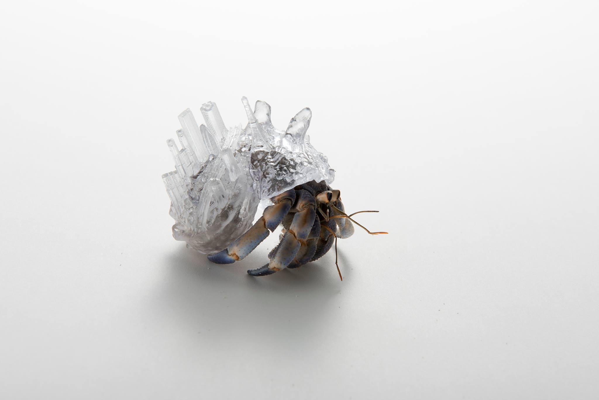 Exhibition: 東京エレクトロン solaé art gallery project 展示《やどかりに「やど」をわたしてみる-Tokyo-》