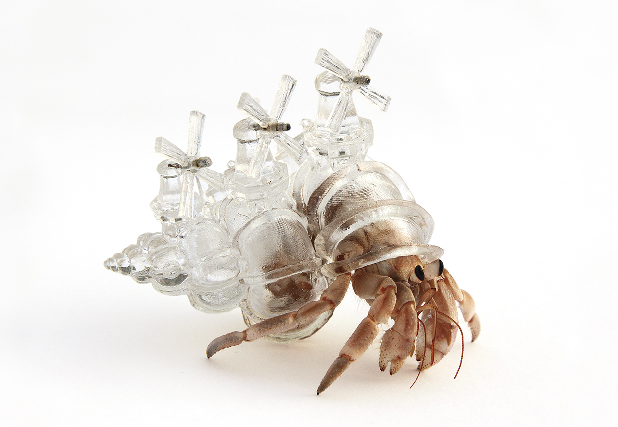"""Why Not Hand Over a """"Shelter"""" to Hermit Crabs? -Border-"""