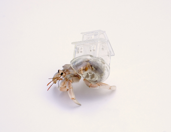 """Why Not Hand Over a """"Shelter"""" to Hermit Crabs?"""